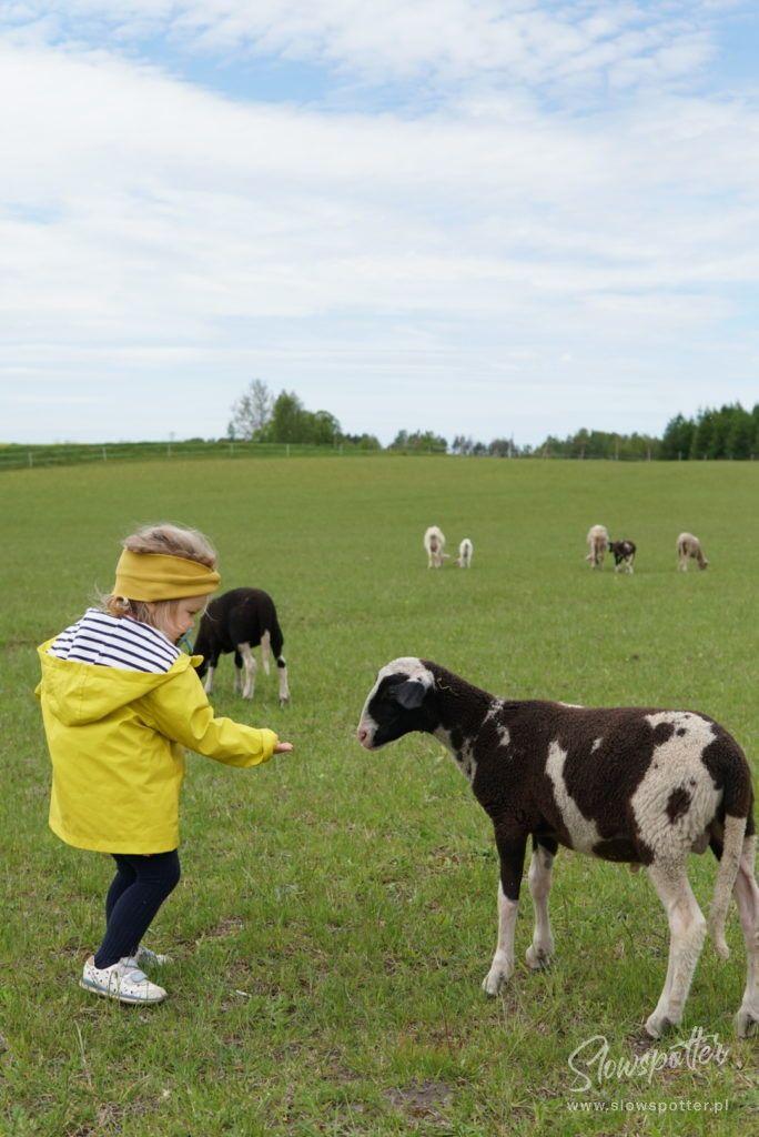 Kwasne Drzewo Jeziorany Agroturystyka Warmia Slowspotter kozy owce