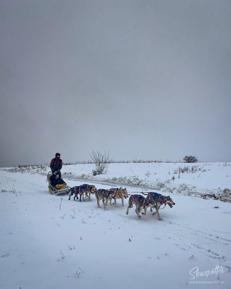 Psy Na Biegunach Lokalna Wycieczka Slowspotter